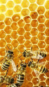 Un piccolo gruppo di api nell'alveare